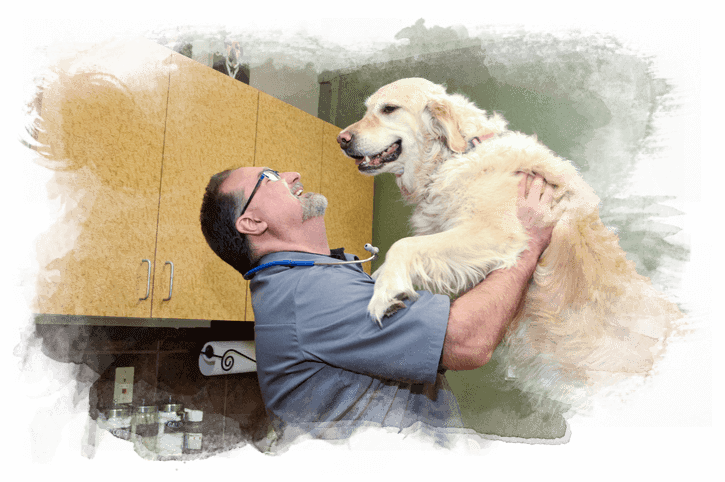 veterinary staff with dog