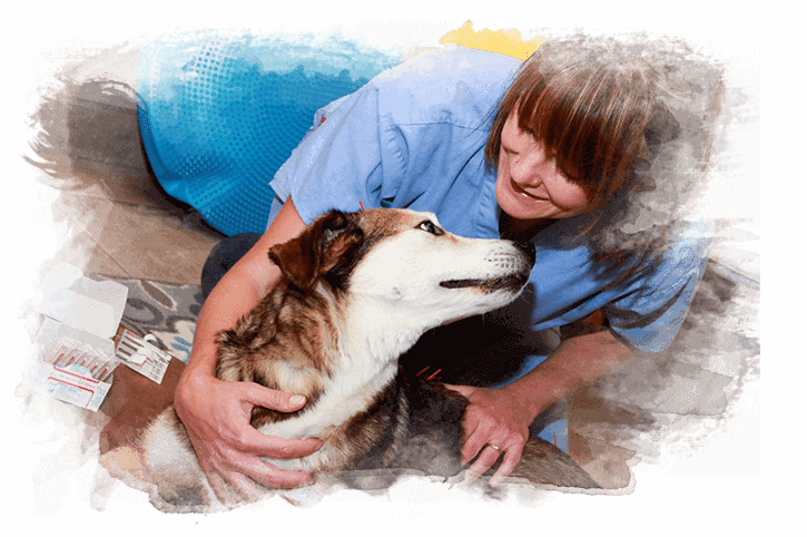Veterinarian Colorado Springs | Westside Animal Hospital